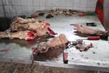 Denizli'de kaçak sakatat işleme tesisinde şok edici manzara