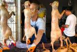 Çin'in bir eyaletinde vahşi hayvan eti yiyenlere para cezası verecek