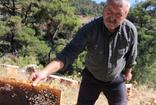 Aydın'da arıcılar şaşkın arılar 'Allah' yazıp, kovanı terk ediyorlar