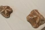Çanakkale'de 2 milyon yaşında olduğu değerlendirilen 6 deniz yıldızı fosili ele geçirildi