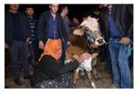 Denizli'de Sabiha ninenin uçurumdan düşen ineği için döktüğü gözyaşları Tarım ve Orman Bakanı'nı harekete geçirdi