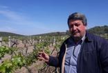 Saruhanlı'da don ve dolu filizlenme döneminde olan üzüm bağlarına zarar verdi