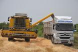 Kırıkhan'da buğday hasadına başlandı