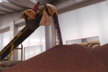 TMO'nun alım yapmaması fındık üreticisini tedirgin etti