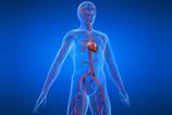 Kalp ve damar hastalıkları nelerdir?