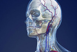 ALS hastalığının belirtileri nelerdir?