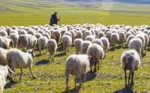 Mersin'de 615 kişi 3 milyon 75 bin lira çoban desteği