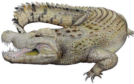 Avustralya'da nesli tükenmiş timsah türü bulundu