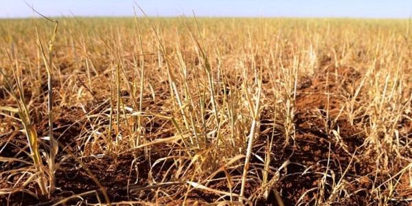 TARSİM'den çiftçiye kuraklık sigortası müjdesi