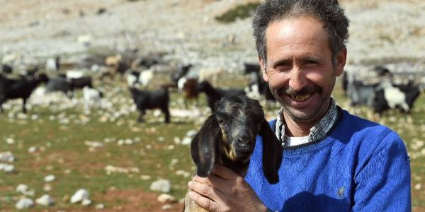 Damızlık kıl keçisi alan çiftçilerin yüzü güldü
