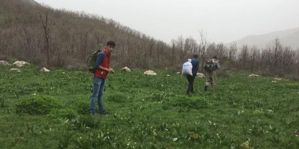 Şırnak'ta köylüler gergedan otu için kilometrelerce yol yürüyorlar