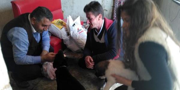 6 yavrusu olan köpek için savcıdan yiyecek yardımı