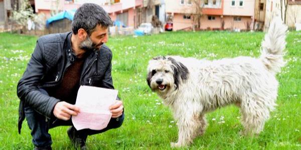 Trabzon'da başıboş dolaşan köpeklerin sahiplerine para cezası