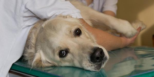 Muş'ta yaralanan köpekler tedavi için Tekirdağ'a getirildi
