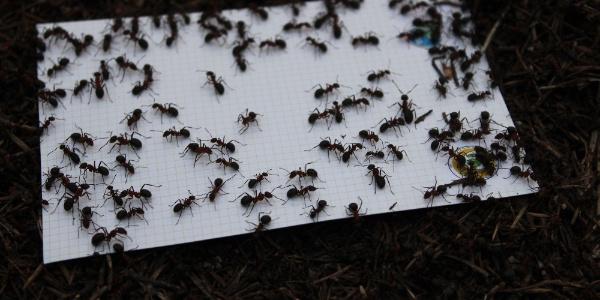 Eskişehir Orman Bölge Müdürlüğü böcek kovucuları devreye soktu
