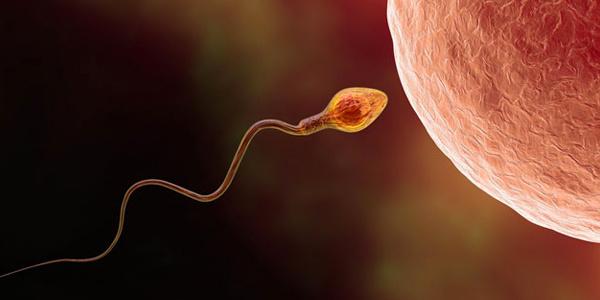 Sperm kalitesini arttıran sağlıklı besinler nelerdir?