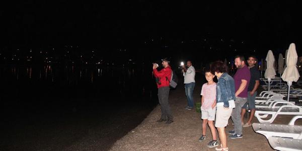 Bodrum sahilinde görülen siyah kuğu yetkilileri alarma geçirdi