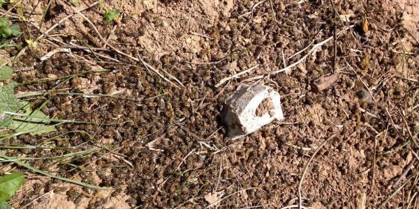 Arıcıların başı bilinçsiz ilaçlama ile başı belada: Binlerce arı telef oldu