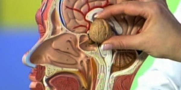 Beyin cerrahisi uzmanından hipofiz bezi uyarısı