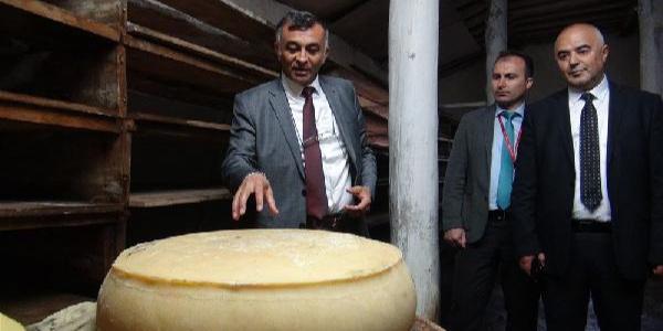THY başarılı acentelirini peynir turu ile ödüllendirdi