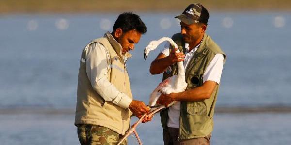 Balıkçılar allı turnayı kurtarmak için zamanla yarıştı