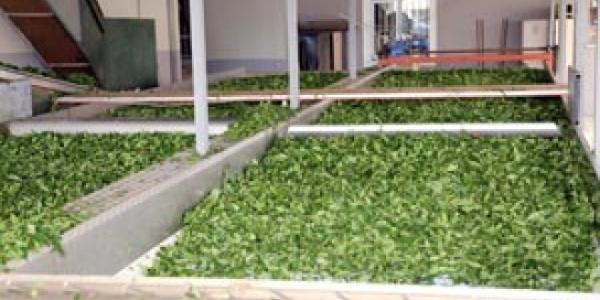 Özel sektör firmalarına kızan çay üreticisi formülü buldu