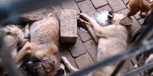 Aydın'da ölen köpeklerin resimleri aylar sonra ortaya çıktı ortalık karıştı