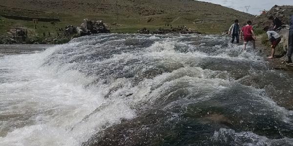 Van'ın uçan balığı inci kefalinin muhteşem göçü devam ediyor