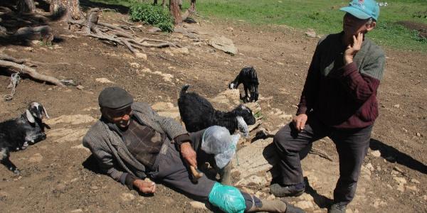 300 koyunu olan 80 yaşındaki vatandaş koyunları sürünerek otlatıyor