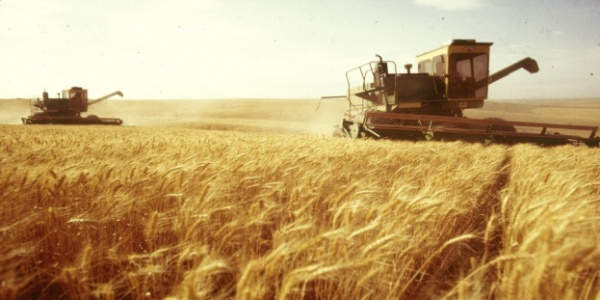Antalya'da buğday hasadı vaktinden 20 gün önce başladı