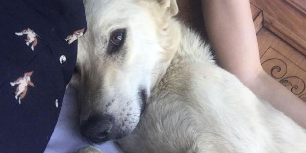 """Boş araziye bırakan """"Beyaz"""" isimli köpek için zanlıya 3 yıla kadar hapis talebi"""