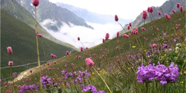 Doğu Karadeniz 4 bin bitki çeşidi ile Avrupa'nın bitkide gen merkezi gibi