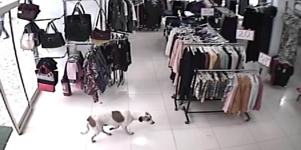 Yağmurdan kaçıp mağazaya giren köpek itlaf edilmiş halde bulundu