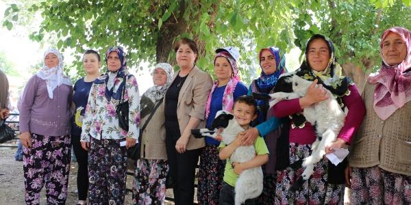 İzmir Büyükşehir Belediyesi'nden kırsalda oturanlara koyun hediyesi