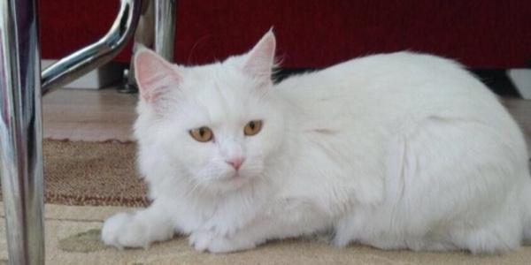 Adıyamanlı vatandaş kayıp kedisi için 2 bin lira vaadetti