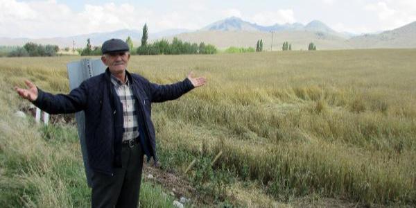 Afyonkarahisar'da patates tarlalarını dolu ve yağmur vurdu