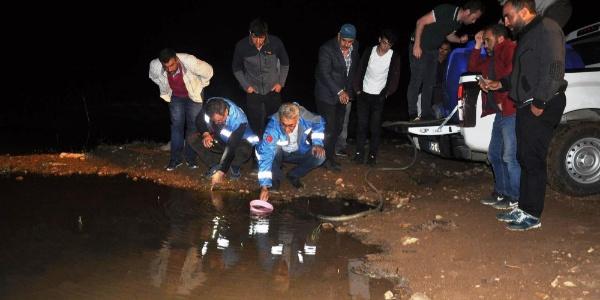 Gümüşhane'nin Kelkit ilçesindeki göletlere 50 bin sazan bırakıldı