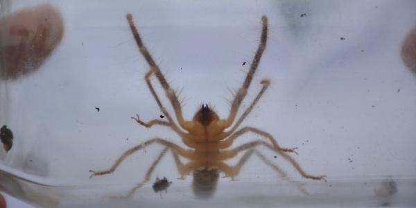 Bilecik'te sinek ve et ile beslenen örümcek muhafaza altına alındı