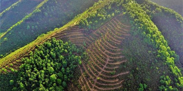 """Zonguldak'ta """"Bal ormanları""""na büyük ilgi"""