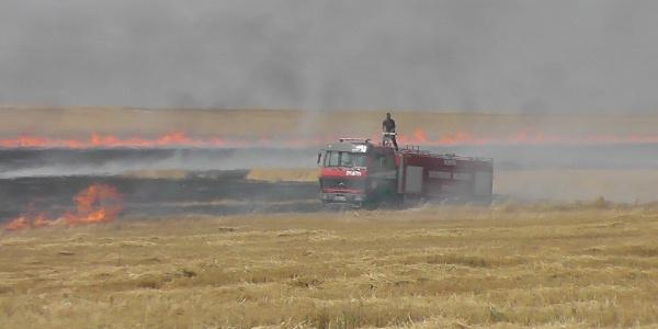 Konya'da 130 hektarlık tarladaki anızlar kargalar yüzünden yandı