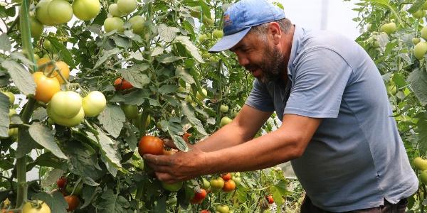 Manisa Büyükşehir'den  9 ilçede 220 üreticiye sera desteği