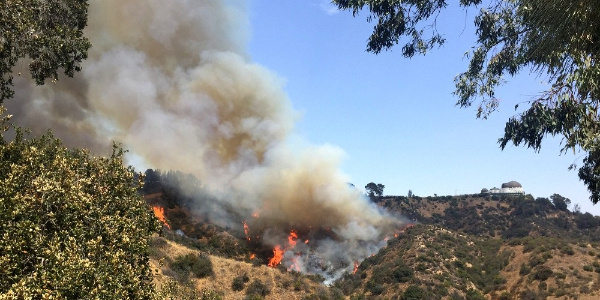 ABD'de ünlü Hollywood tabelalı Griffith Park'ta yangın