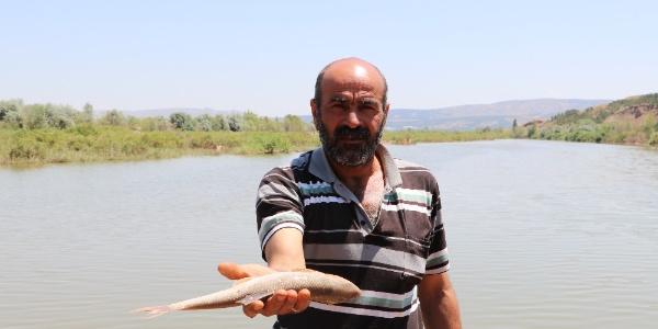 Sivas'taki toplu balık ölümlerinin nedeni belli oldu: Oksijen azlığı
