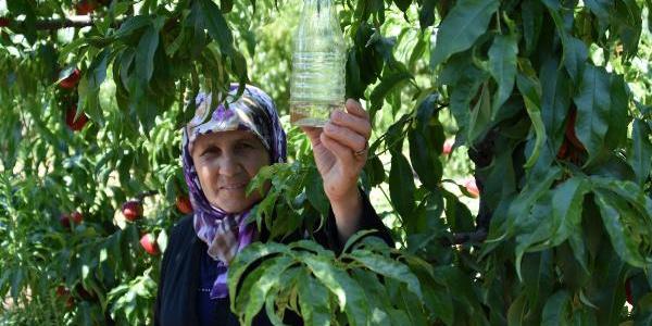 """Çanakkale'de meyvelerin düşmanı sirke sineğine """"sirkeli"""" tuzak"""