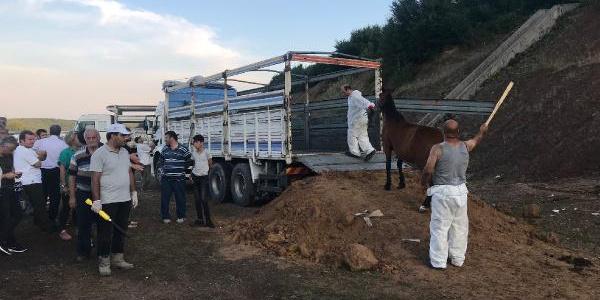 Beykoz'da 70 günlük kriz çözüldü; atlar tahliye ediliyor