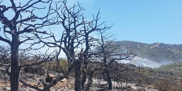 Tunceli'de 3 gündür devam eden yangın söndürüldü