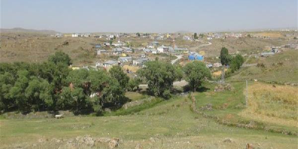 Kars'ta tilki yüzünden bir köy karantinaya alındı