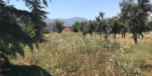 Denizli Büyükşehir'in yeşil alana akaryakıt istasyonu planı Bölge İdare'den döndü