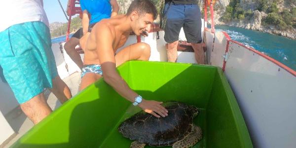 Dalyan'ı tanıtmakla görevli turist deniz kaplumbağaları ile tanıştı