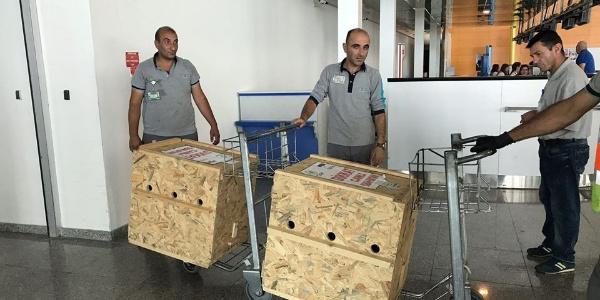 Kars'ta saldırıya uğrayan yavru ayılar tedavi sonrası Bursa'ya gönderildi